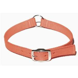Hallmark 91566 Single Ply Nylon Safety Collar   Blaze Orange   26 Inch