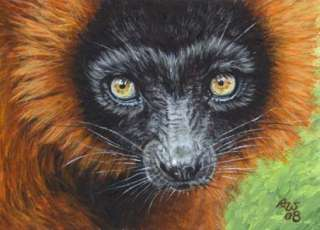 Akiko ORIGINAL ACEO Painting Red Ruffed Lemur Wildlife
