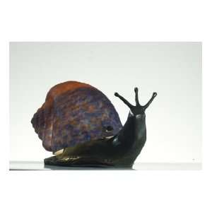 Meyda Tiffany 102414 Snail   One Light Accent Table Lamp